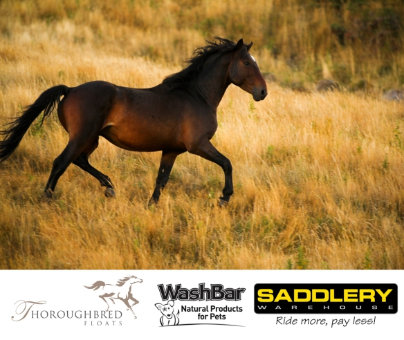 Stallion Challenegs March Press Release
